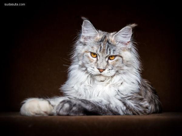 Robert Sijka 动情之眸 宠物摄影欣赏