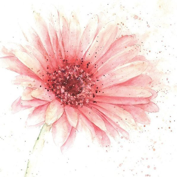 Rose Eddington 唯美的花 手绘自然插画欣赏