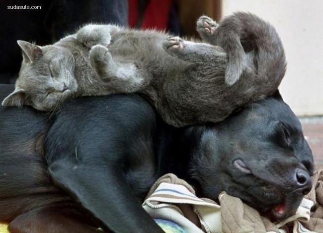 喵咪爱睡觉 宠物摄影欣赏