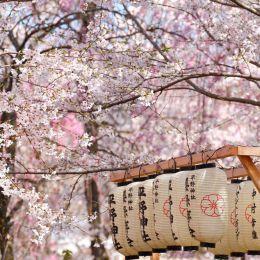 魔法般的粉红色樱花季