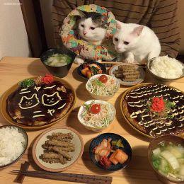 """喵咪说""""我也想吃""""宠物摄影欣赏"""