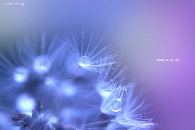 花朵摄影师 yayoi