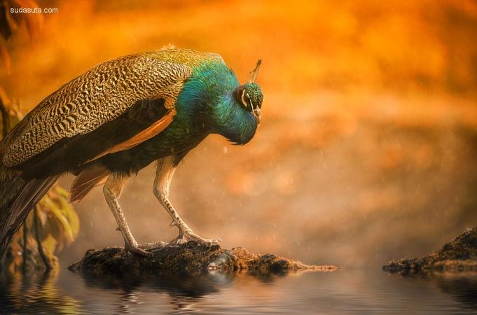 Detlef Knapp 动物摄影欣赏