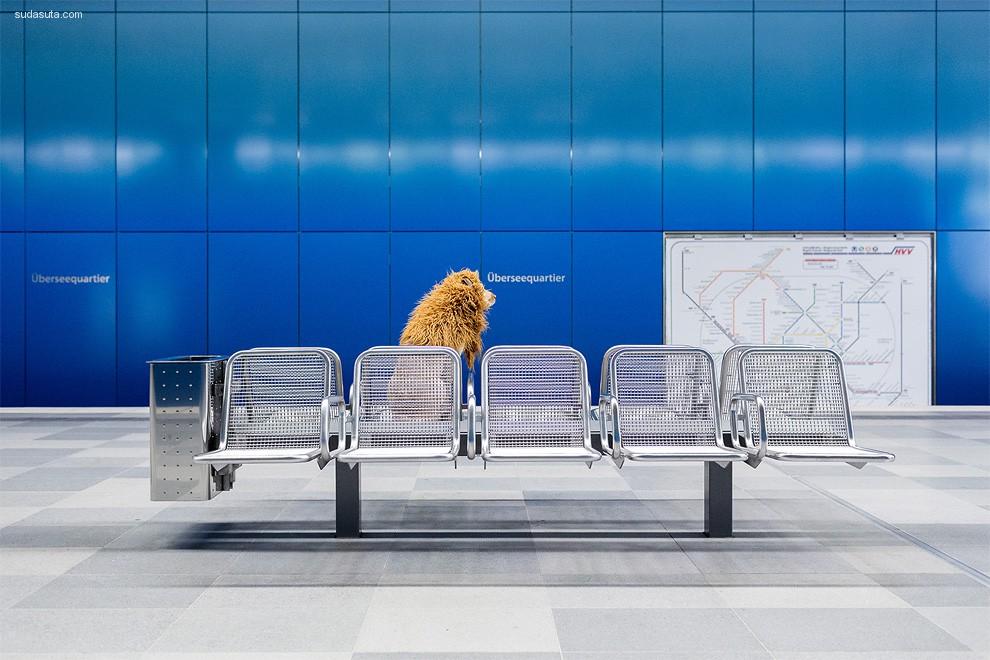 Julia Marie Werner 宠物摄影欣赏