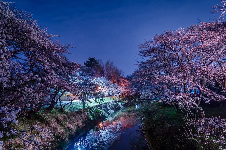 Kenichi Ueno 夜晚的樱花