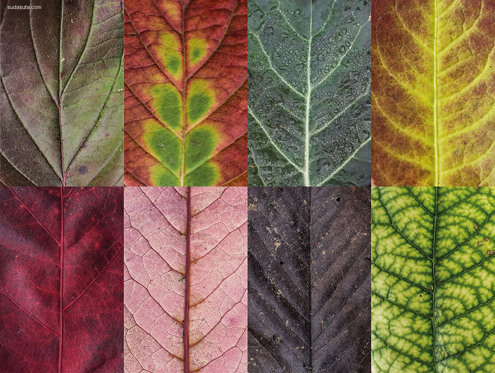 Sepia Fotografie 叶子的艺术