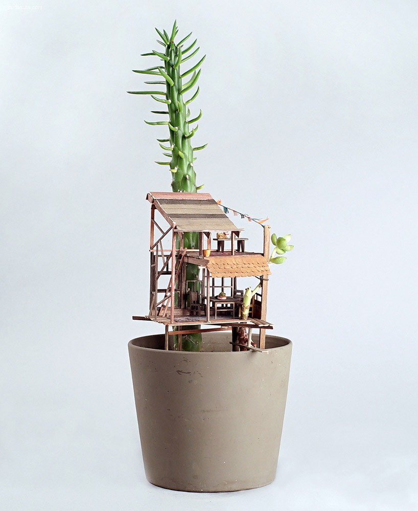 Jedediah Corwyn Voltz 细小的盆栽设计