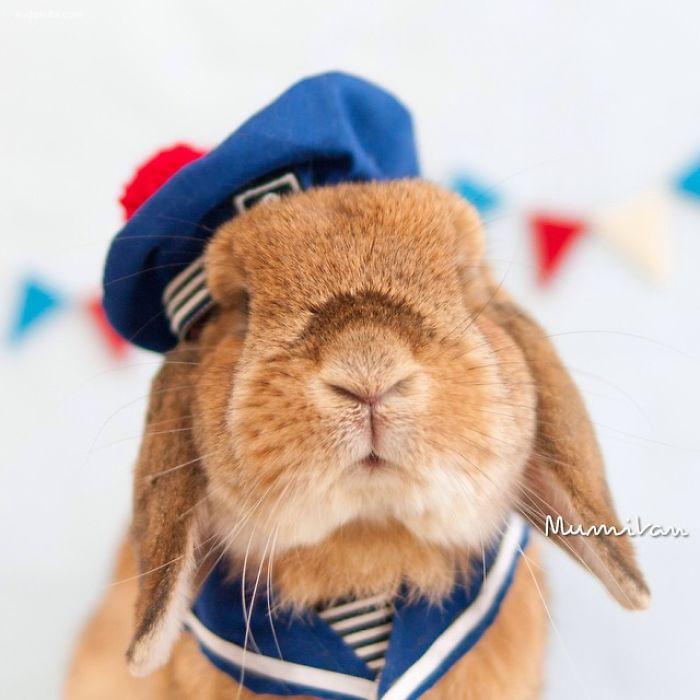 mumitan兔子的cosplay装