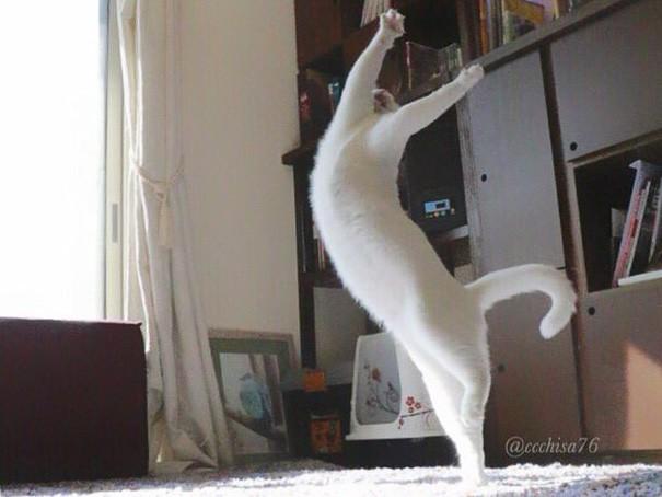瀬戸にゃん ちさ 谜样的猫之舞蹈