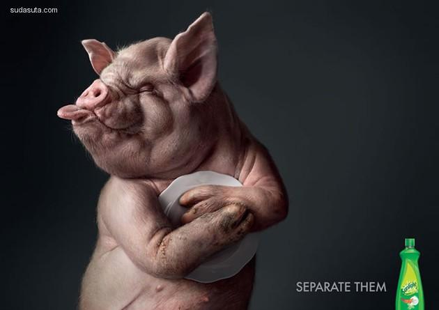 40+ 来自世界各地的最佳动物广告创意设计欣赏