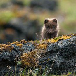 系列摄影 可爱的萌蠢小狐狸