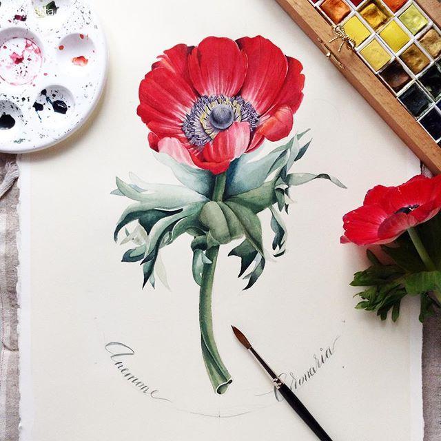 Elena Limkina 花的手绘