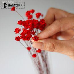 kakawood 的天然干花
