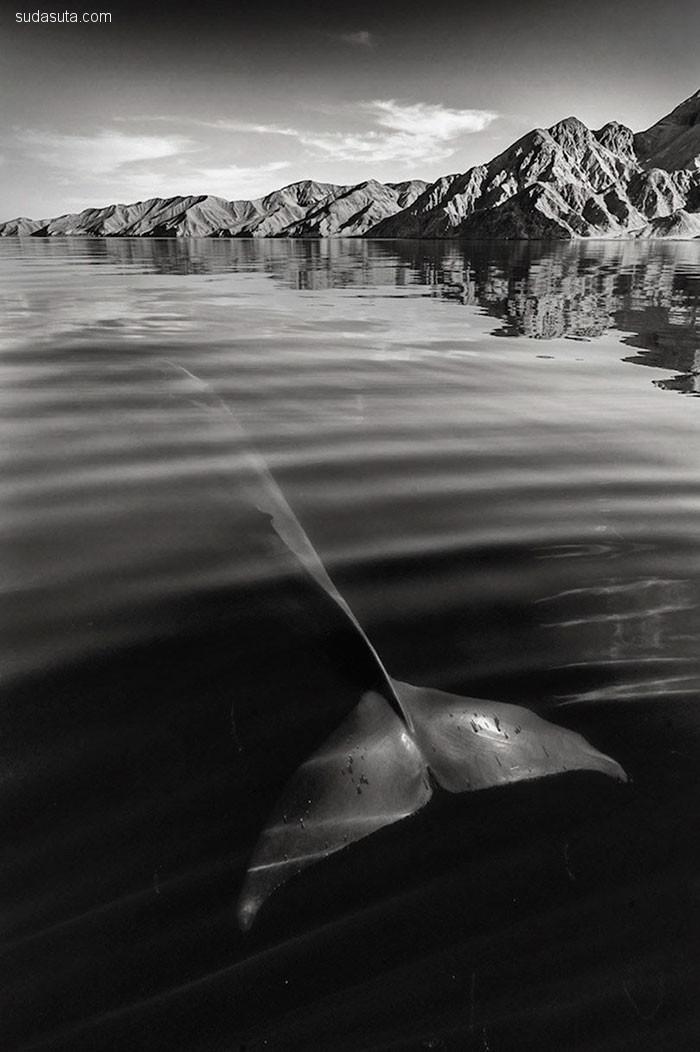 Christopher Swann 海洋之美