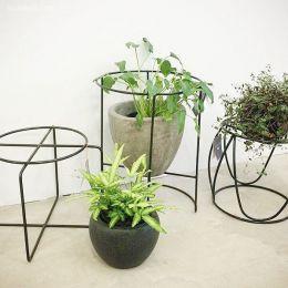 IVY MUSE 植物家居设计