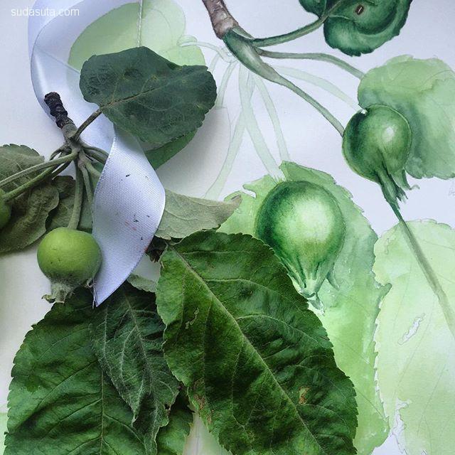 Irina Sart 水彩自然花朵插画欣赏