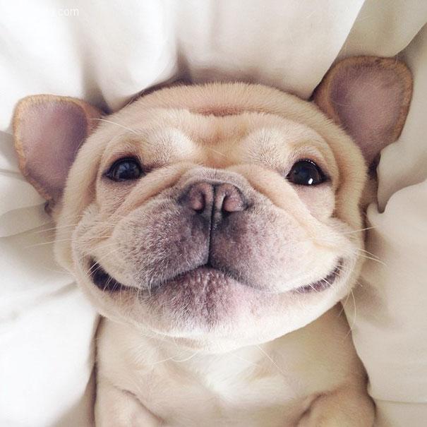 遇见会笑的Milo 宠物摄影欣赏