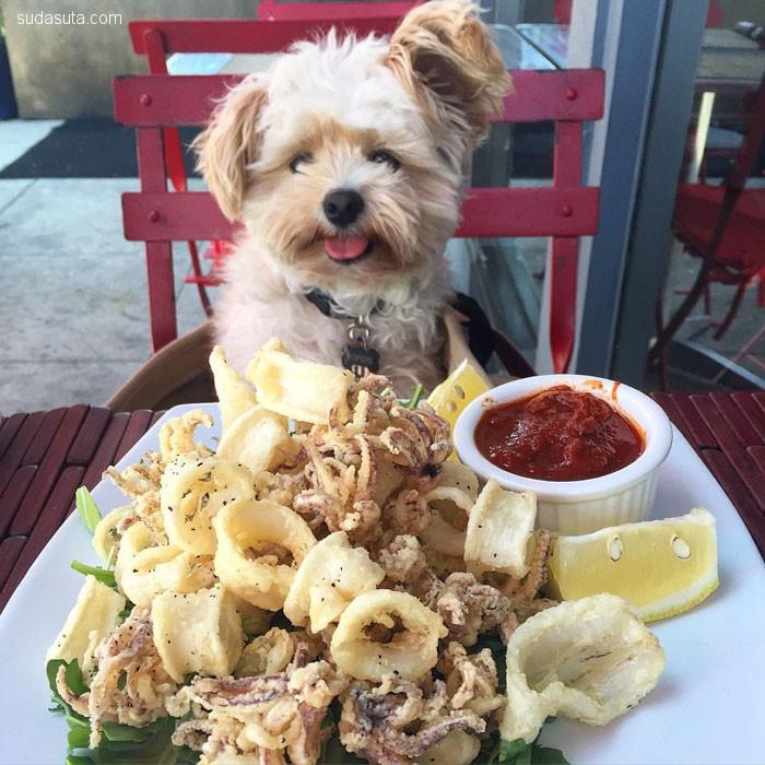 Popeye 吃遍美食 宠物摄影欣赏