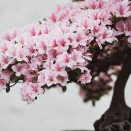 Stephen Voss 迷人的盆栽植物 主题摄影欣赏
