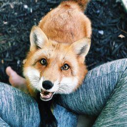 J U N I P E R 狐狸日记
