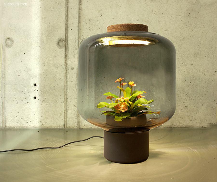 Emilia Lucht 和 Arne Sebrantke 植物与灯