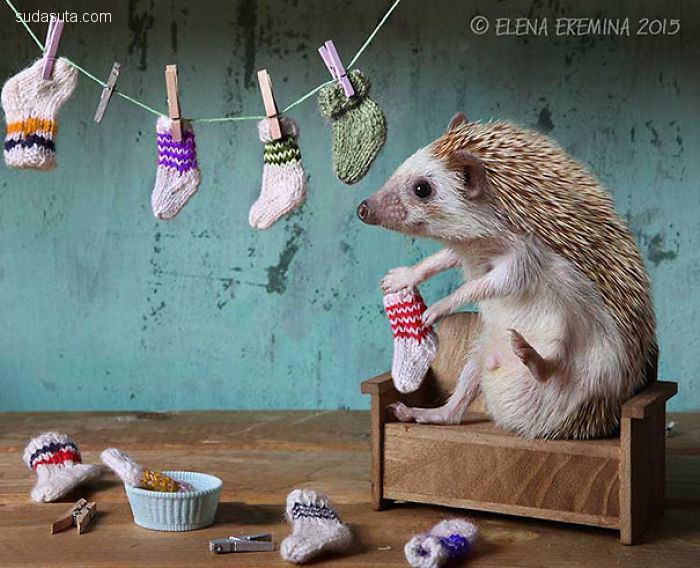 Elena Eremina 可爱刺猬的优雅生活