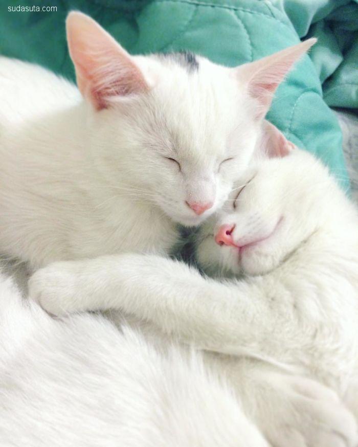 世界上最美的双胞胎猫咪