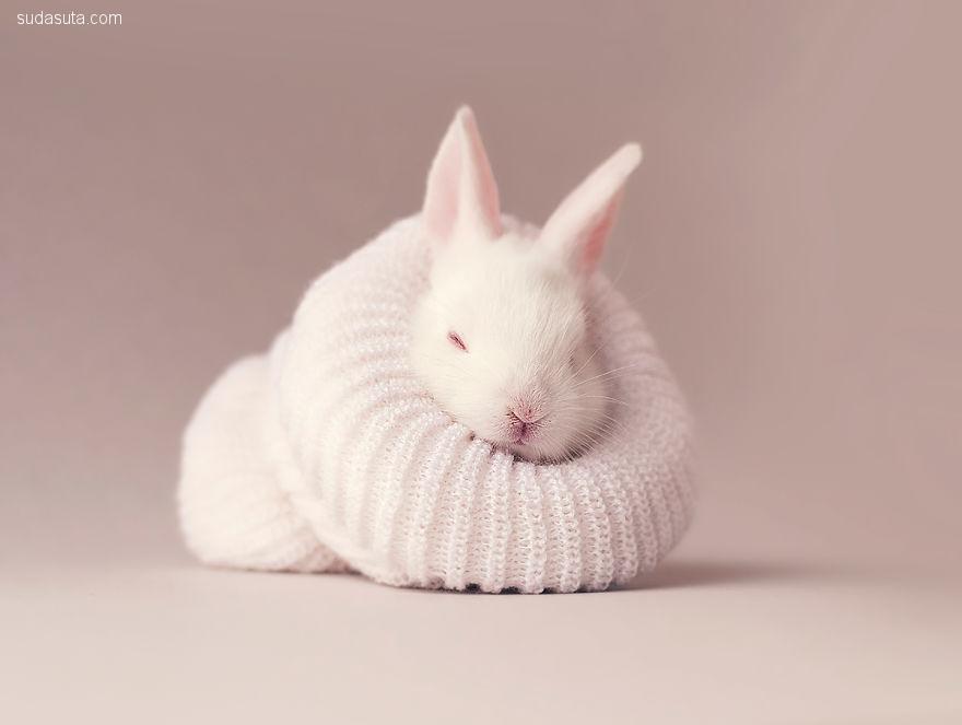 Tooni 可爱的兔宝宝 宠物摄影欣赏