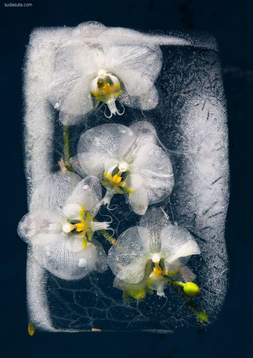 Tharien Smith 和 Bruce Boyd 冰冻的花朵