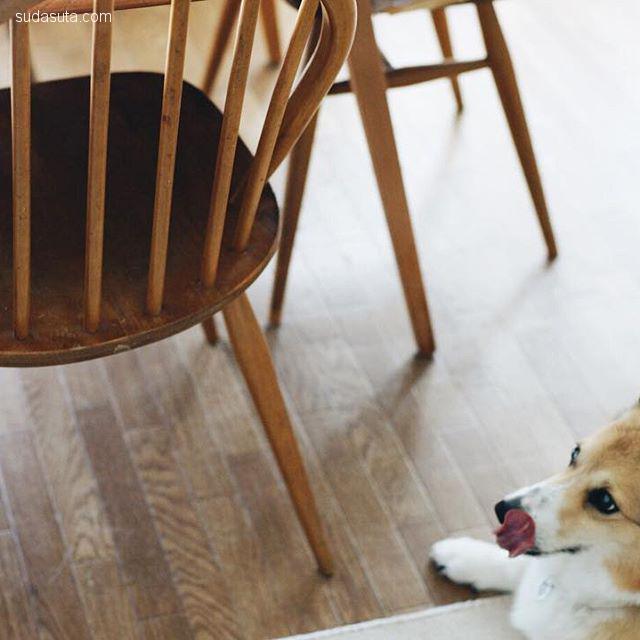tobiraa 美食生活与狗