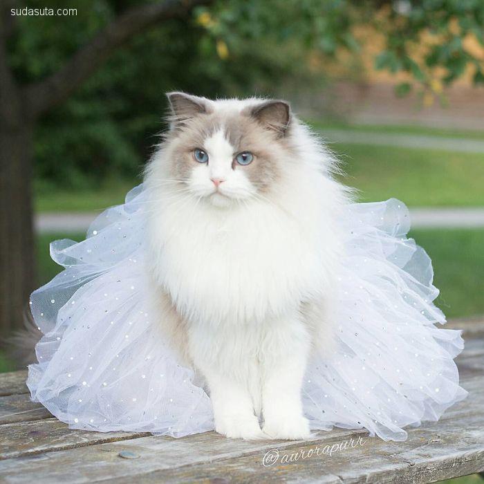 Aurora 美丽优雅的喵公主