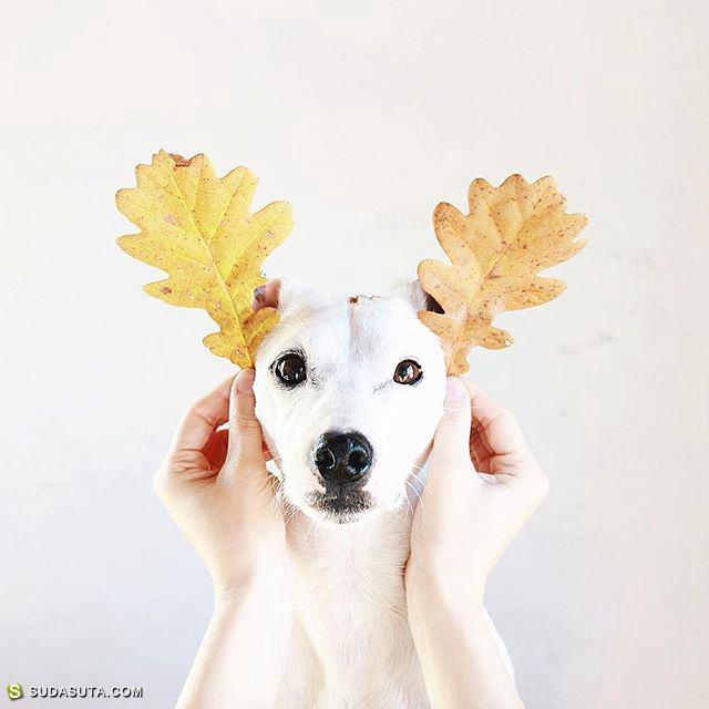 Jeni Krauze 设计师与狗