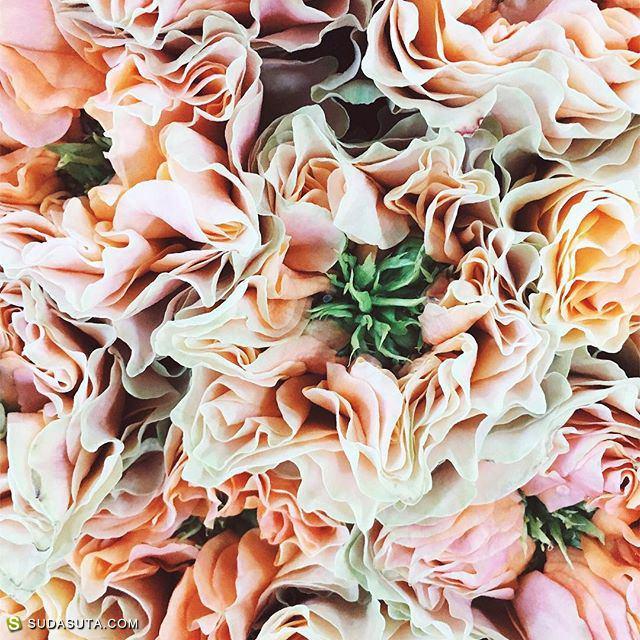 Katherine Radetskaia 咖啡花朵和旅行