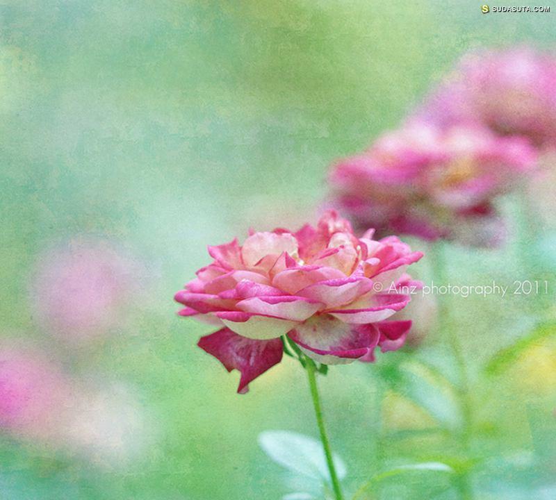 Salmah MK 花朵花朵