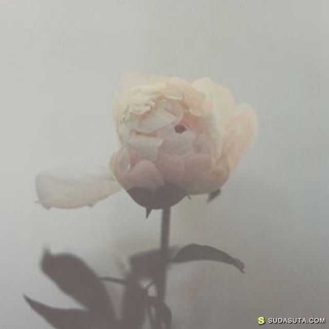 Waking Up With Venus 内衣,女生与花