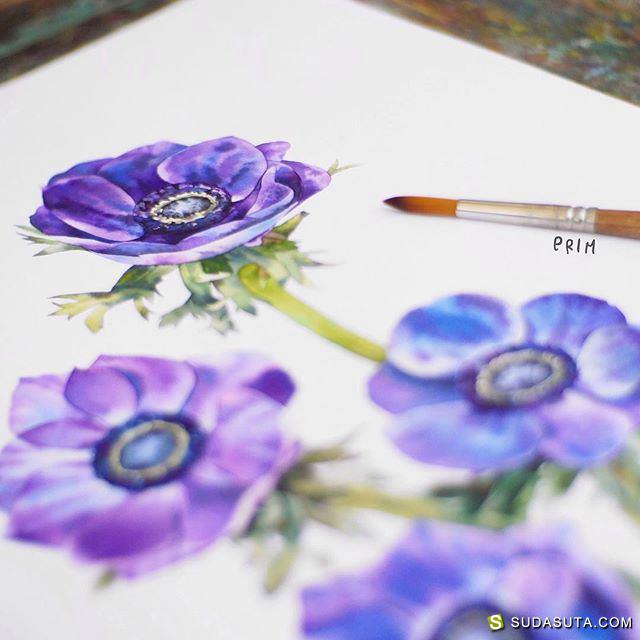 primiita的花 水彩手绘插画欣赏