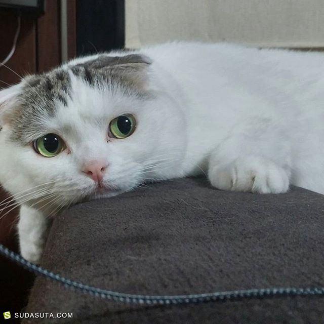 rai_itosan 猫与玩具