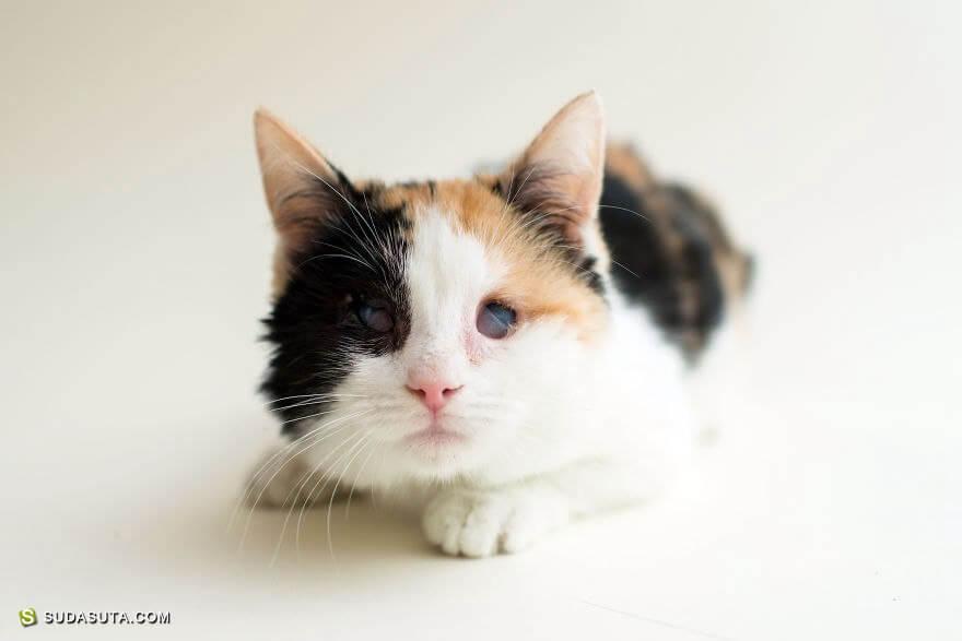 ImogenTheKitten 猫咪的摄影