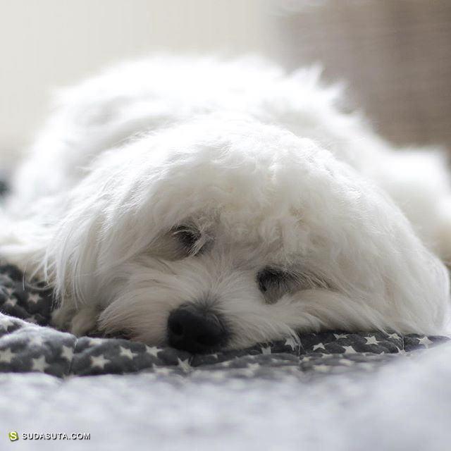 Bonnie 白色白色 静物摄影欣赏