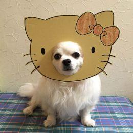 Greta J. 初级Ccosplay宠物摄影欣赏