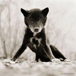 Isa Leshko 动物肖像摄影欣赏