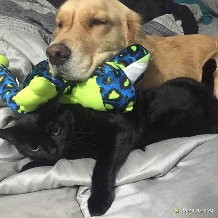 Mojito 和它的玩具们 宠物摄影欣赏