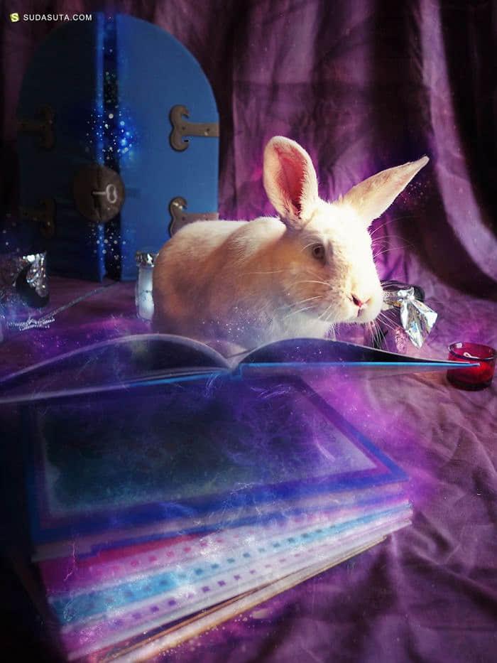Rachele Totaro 童话主题的宠物摄影欣赏