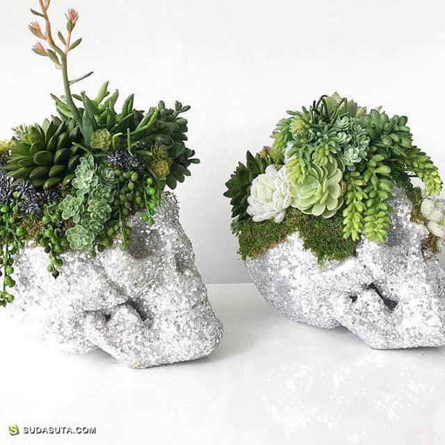 Succulent City 挚爱多肉君