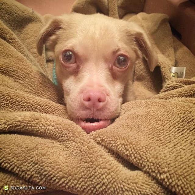 坚强而又蠢萌的狗狗 Tucker