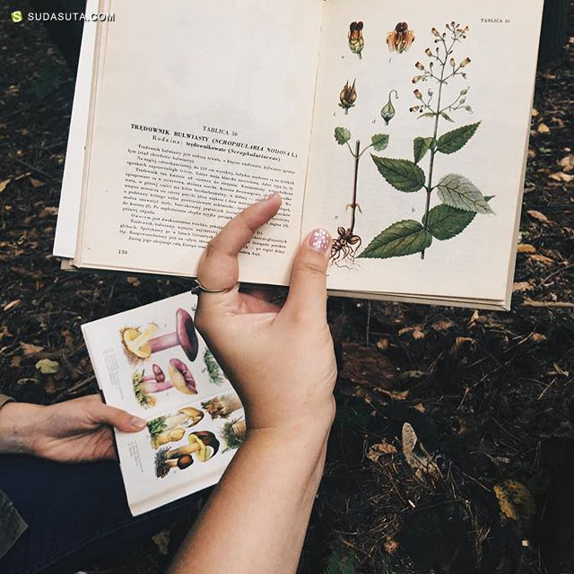 Moonriselan 的植物学 安静的lomo生活