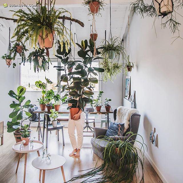Urban Jungle Bloggers 我们生活在丛林中