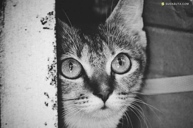 Cata N 猫咪与城市