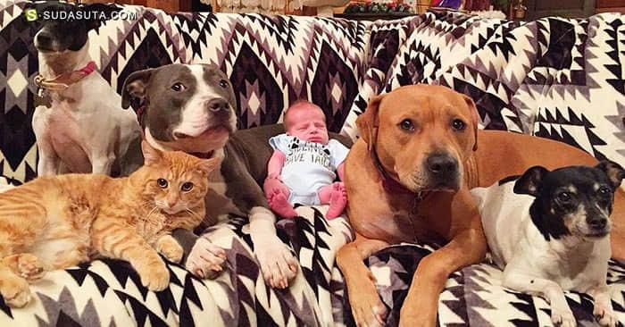Sonny 和他的兄弟姐妹 家庭及宠物摄影欣赏