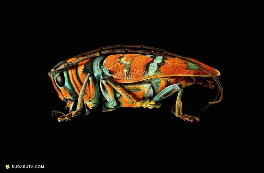 Levon Biss 昆虫摄影欣赏